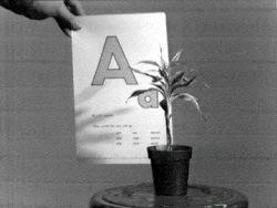 baldessari plant